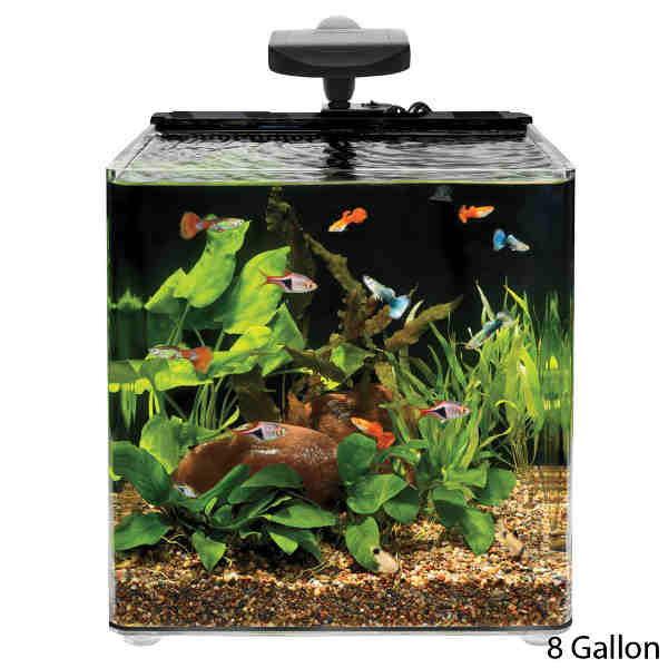 The best 10 gallon fish tanks and kits 2018 for Best fish for 10 gallon aquarium