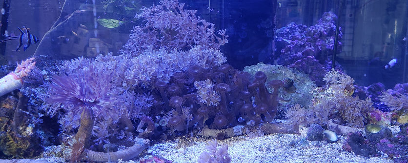 Soft Home Gorwn Corals